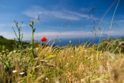 grass-3188736_1920.jpg